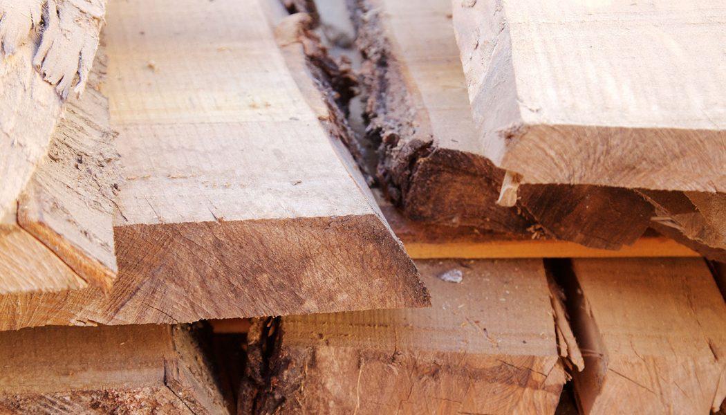 Erlebnisreise Holzfällerpatent