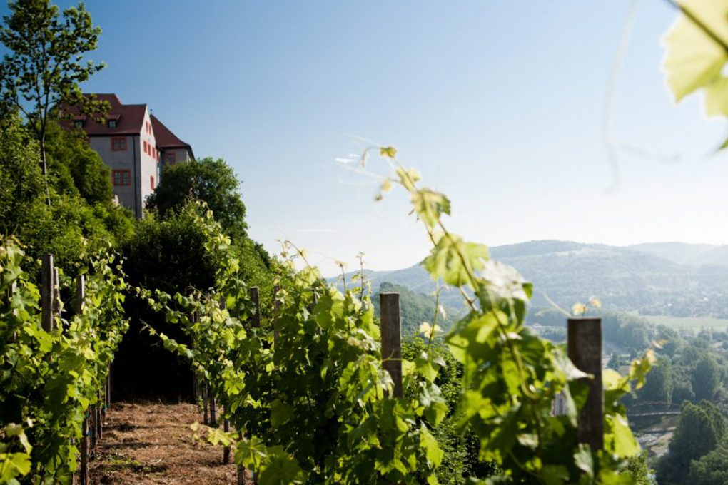 Thüringer Weine entdecken