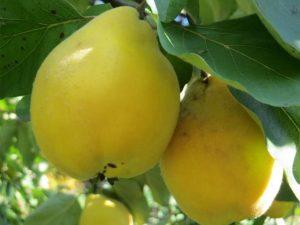 Obstweinkellerei1