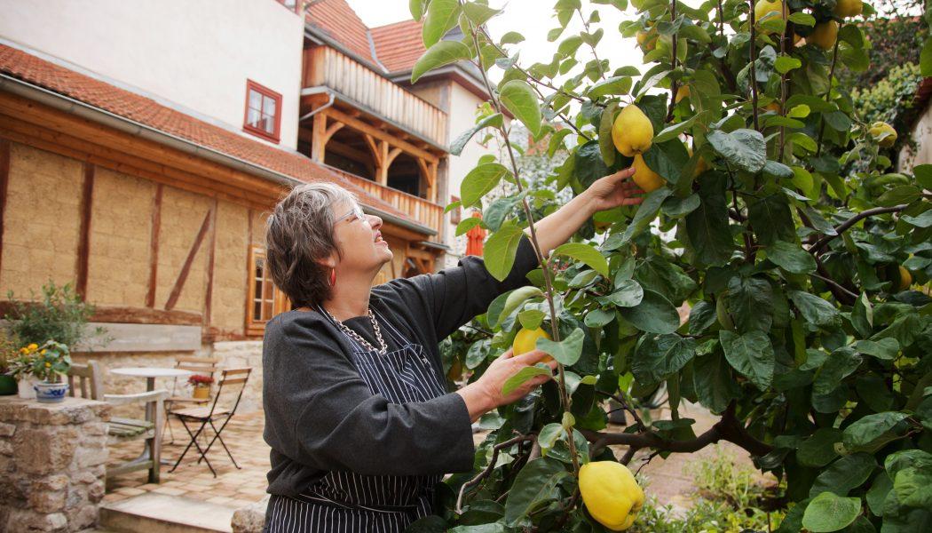 Ernten des frischen Obsts_Hotel Stadthaus Arnstadt