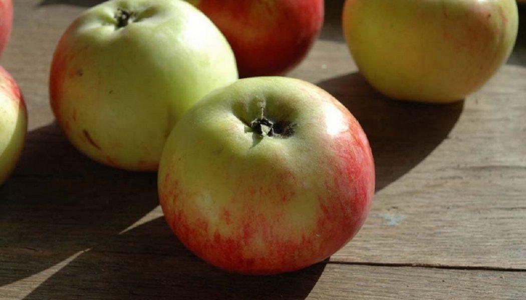 Äpfel für die Weinherstellung